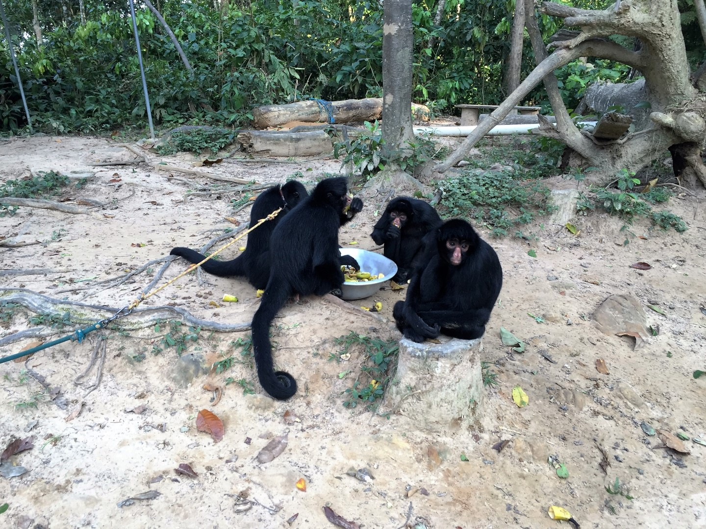 Spidermonkey breakfast