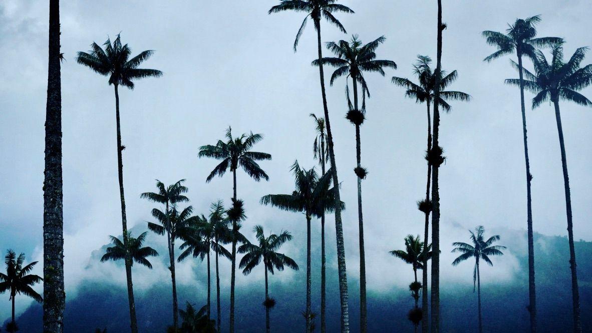Jaunais gads pie kolibri un visgarākajām palmām